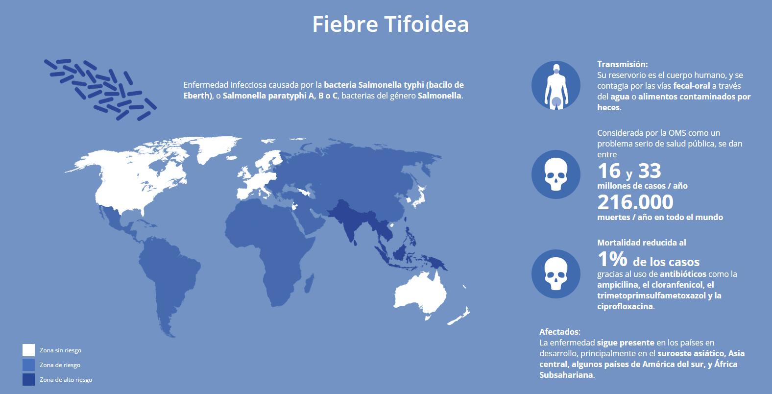 fiebretifoidea.png